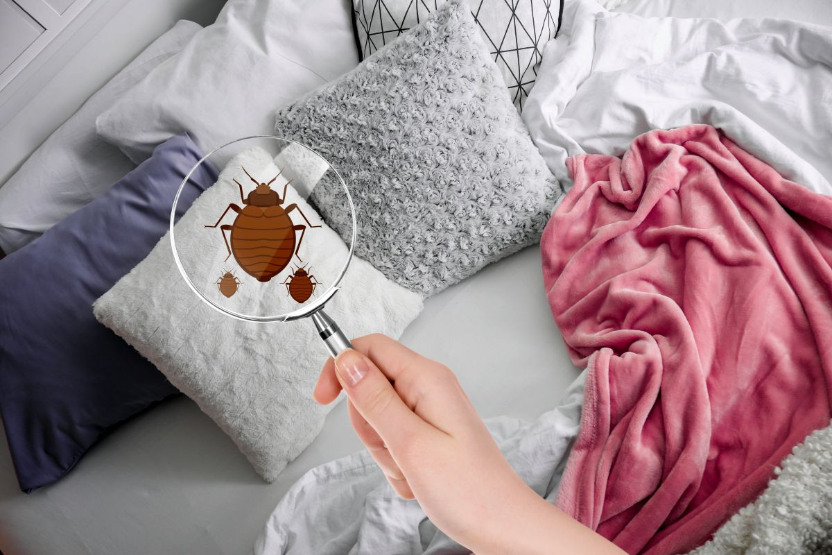 Comment détecter la punaise de lit ?